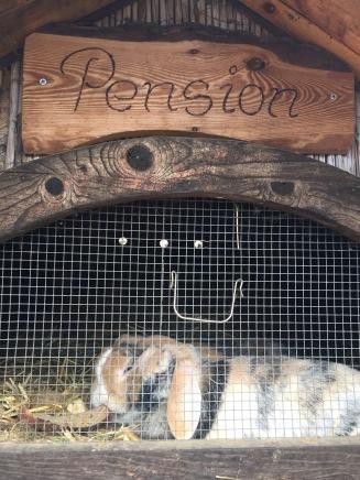 Kaninchen Pension auf dem Kinderbauernhof Mümmelmann